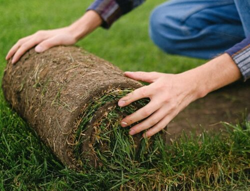 Celtic Turf Becomes First Local Turf Company To Sell Online